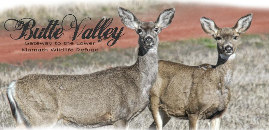 ButteValleyMastheadWildlife
